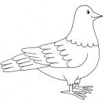 zvirata omalovanky  : zviratka holub 150x150 Zvířátka A Ž