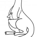 zvirata omalovanky  : zviratka klokan 150x150 Zvířátka A Ž