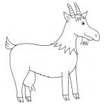 zvirata omalovanky  : zviratka koza 150x150 Zvířátka A Ž