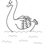 zvirata omalovanky  : zviratka labut 150x150 Zvířátka A Ž
