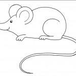 zvirata omalovanky  : zviratka mys 150x150 Zvířátka A Ž