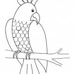 zvirata omalovanky  : zviratka papousek 150x150 Zvířátka A Ž