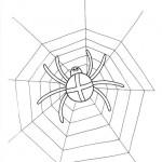 zvirata omalovanky  : zviratka pavouk 150x150 Zvířátka A Ž