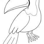 zvirata omalovanky  : zviratka tukan 150x150 Zvířátka A Ž