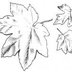 podzimni omalovanky  : podzimni listi 04 150x150 Podzimní listy