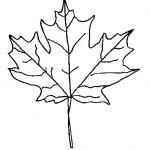 podzimni omalovanky  : podzimni listi 05 150x150 Podzimní listy