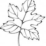 podzimni omalovanky  : podzimni listi 08 150x150 Podzimní listy