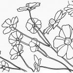 rostliny kvetiny kvetinky jarni tvoreni jarni omalovanky  : jarni kakosty 150x150 Jarní květinové tvoření
