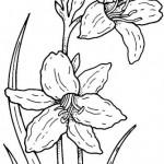 rostliny kvetiny kvetinky jarni tvoreni jarni omalovanky  : jarni narcisy 150x150 Jarní květinové tvoření