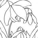 rostliny kvetiny kvetinky jarni tvoreni jarni omalovanky  : jarni snezenky 150x150 Jarní květinové tvoření