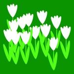 rostliny kvetiny kvetinky jarni tvoreni jarni omalovanky  : jarni snezenky na louce 150x150 Jarní květinové tvoření