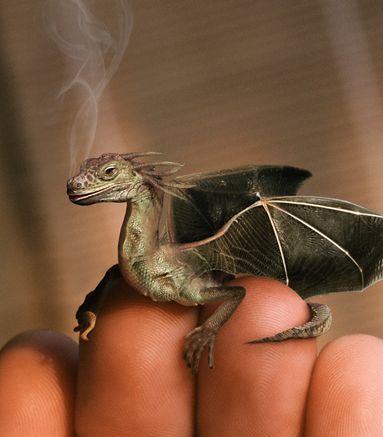 podivejte se na fotografii dnešniho draka a jemu podobných