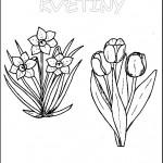 kvetiny na jare kvetinky jarni omalovanky  : 01 jarni kvetiny 150x150 Jarní kytičky