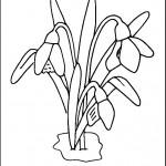 kvetiny na jare kvetinky jarni omalovanky  : 02 snezenka 150x150 Jarní kytičky