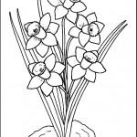 kvetiny na jare kvetinky jarni omalovanky  : 04 narcis 150x150 Jarní kytičky