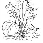kvetiny na jare kvetinky jarni omalovanky  : 05 fialka 150x150 Jarní kytičky