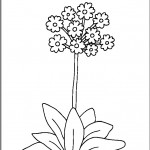kvetiny na jare kvetinky jarni omalovanky  : 06 petrklic 150x150 Jarní kytičky