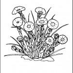 kvetiny na jare kvetinky jarni omalovanky  : 07 pampeliska 150x150 Jarní kytičky