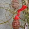 Vajíčka omotaná provázkem
