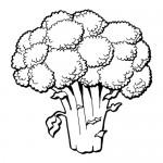 jidlo potraviny omalovanky obrazky  : zelenina brokolice 150x150 Zelenina