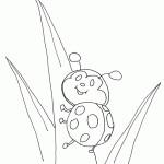 zvirata hmyz  : beruska 10567 150x150 150x150 Motýlí