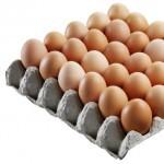 jarni tvoreni  : plato pro vejce 150x1505 150x150 Zvířátka, zápichy do květináče