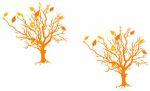 listnate_stromy